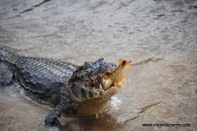 Pantanal Passeio de Barco