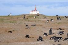 Punta Arenas - Ilha Magdalena
