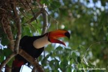 Pantanal Fazenda Santa Clara