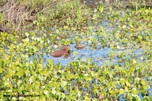 Pantanal Safári